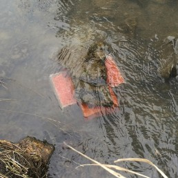 Mätirasia sijoitettuna veden alle.